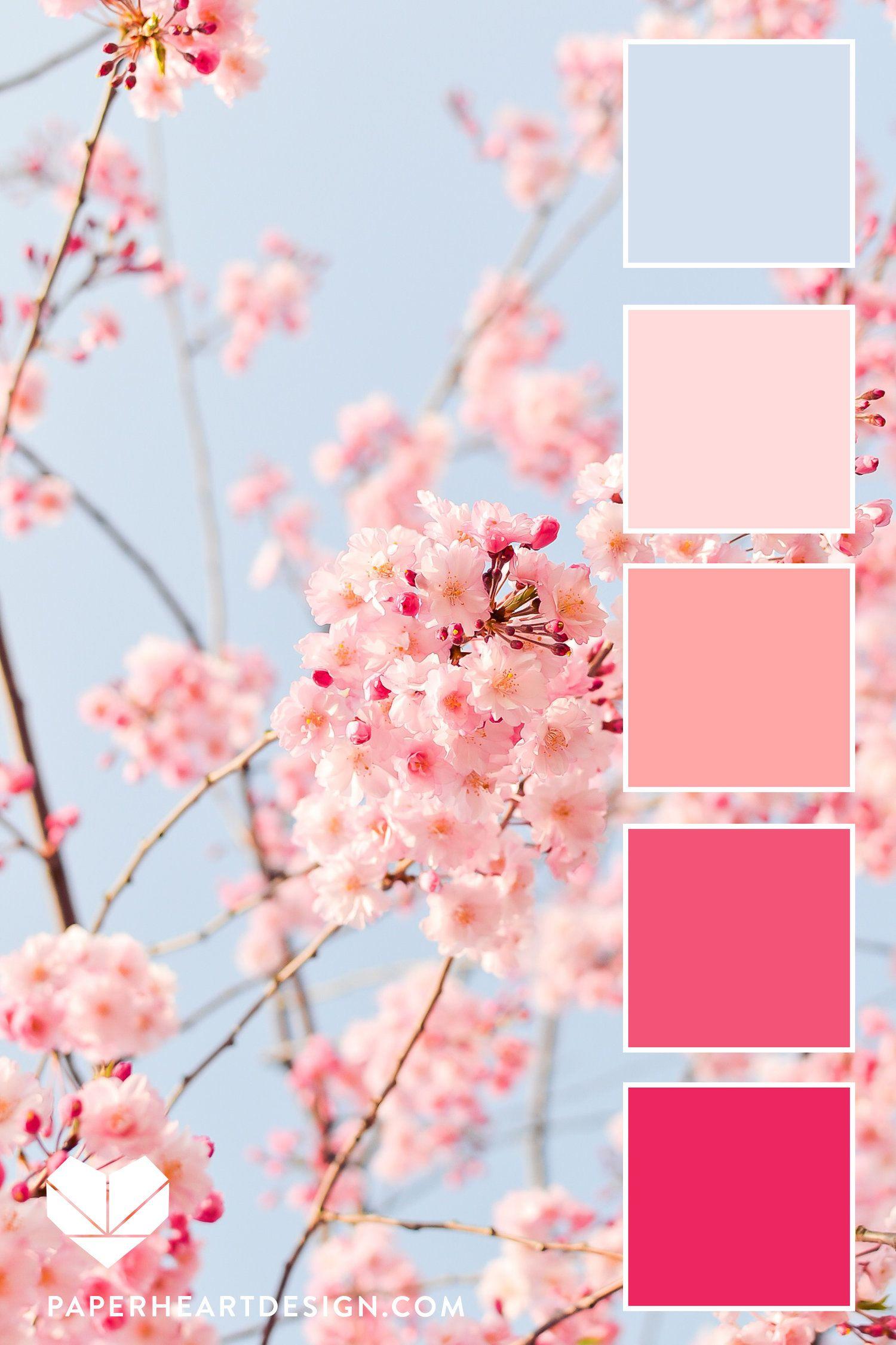 Cherry Blossoms Jvermilyea Cherry Blossom Japan Cherry Blossom Flowers Sakura Cherry Blossom