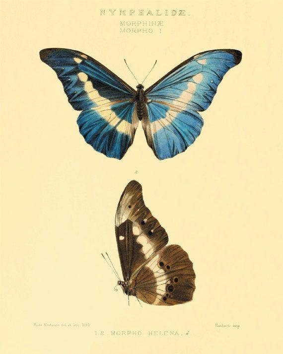 Vintage Butterfly art print Garden art print Cottage art Victorian ...