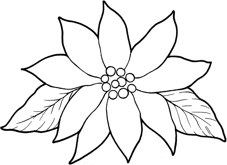 poinsettia coloring pages for kids on colors of picturescom