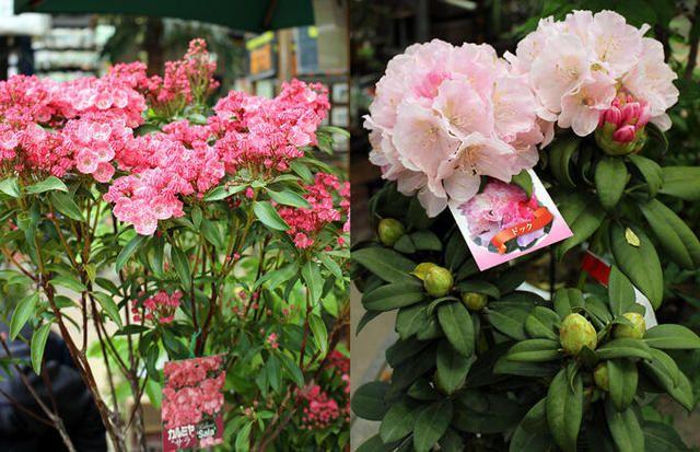 「ハンズマンで春を満喫!」6:  その美しさは写真ではとてもお伝えしきれませんが、ハンズマンの豊富な植物からほんの一部をご紹介します。