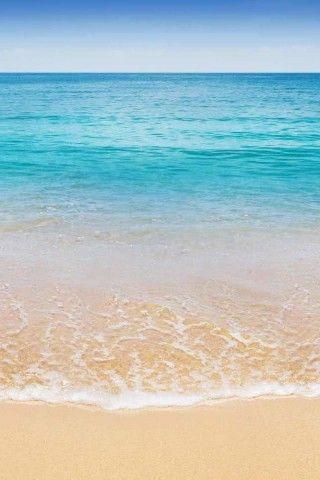 False Color Coconut Trees Iphone 6 Wallpaper Beach Background