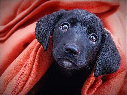 20 Total Susse Hunde Baby Bilder Bilder Videos Lol De Tiere Suss Susse Tierfotos Labrador Mischling Welpen Hundeblick