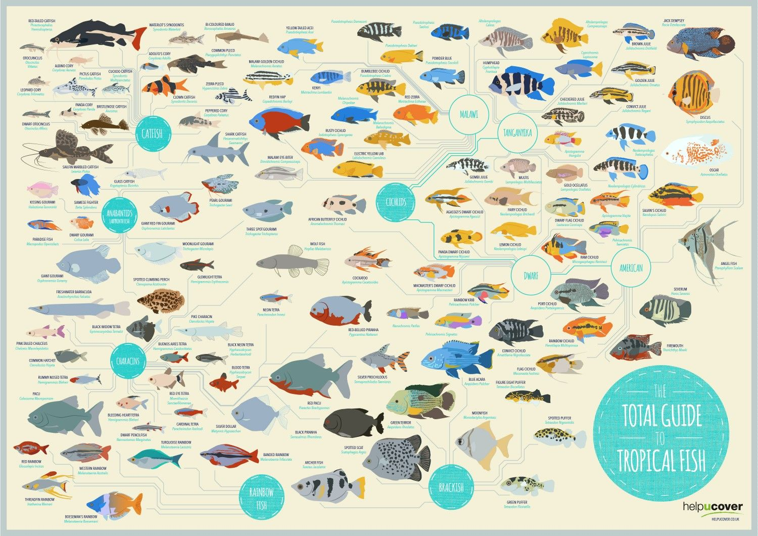 The Total Guide To Tropical Fish Infographic Tropical Fish Fish Infographic Fish List