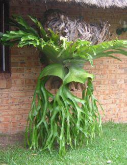 Compra venda rvores saiba mais sobre plantas for Vivero de plantas exoticas