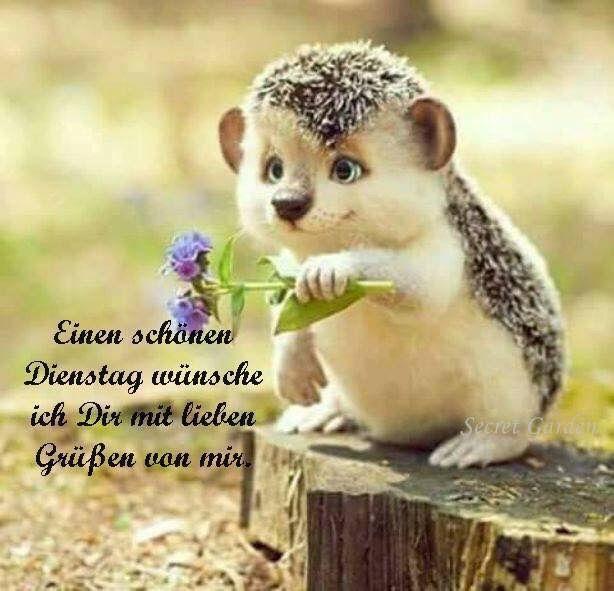 Pin Von Tinka Katze Auf Bilder Guten Morgen Dienstagsspruche