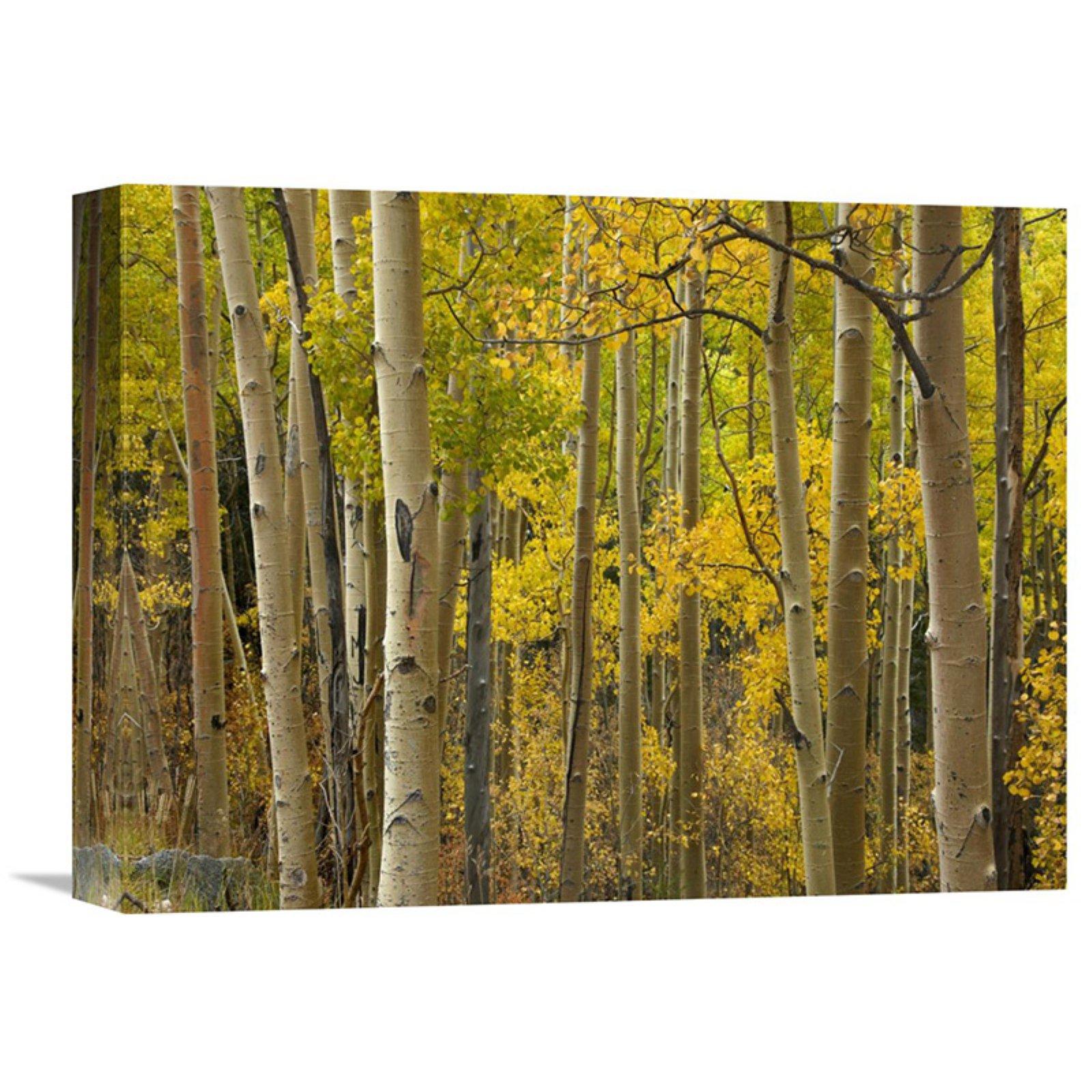 Canvas Santa Fe >> Global Gallery Aspen Trees In Autumn Santa Fe National