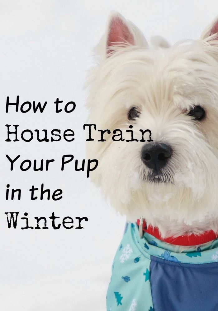 How To House Train Your Pup In The Winter Dog Training Training