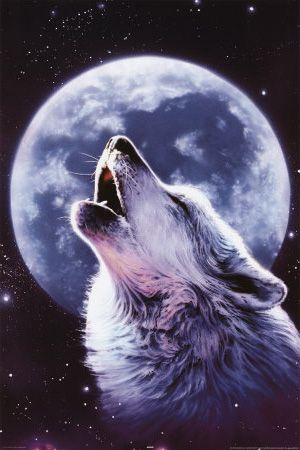 WILD WOLF SCARY EYES POSTER ANIMAL FULL MOON  HUGE LARGE WALL IMAGE PRINT
