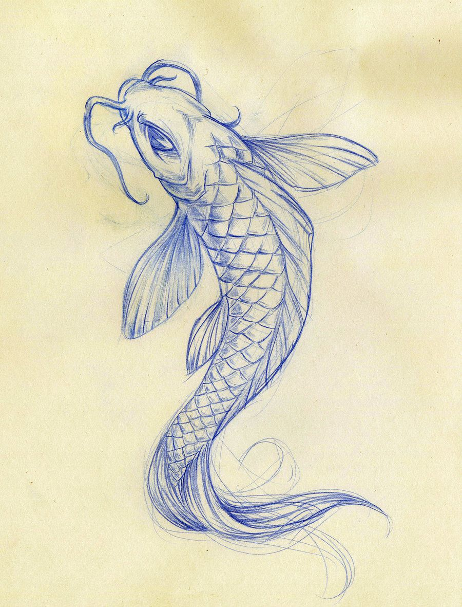 Koi Fish Drawings Koi Fish Sketch By Daeo Traditional