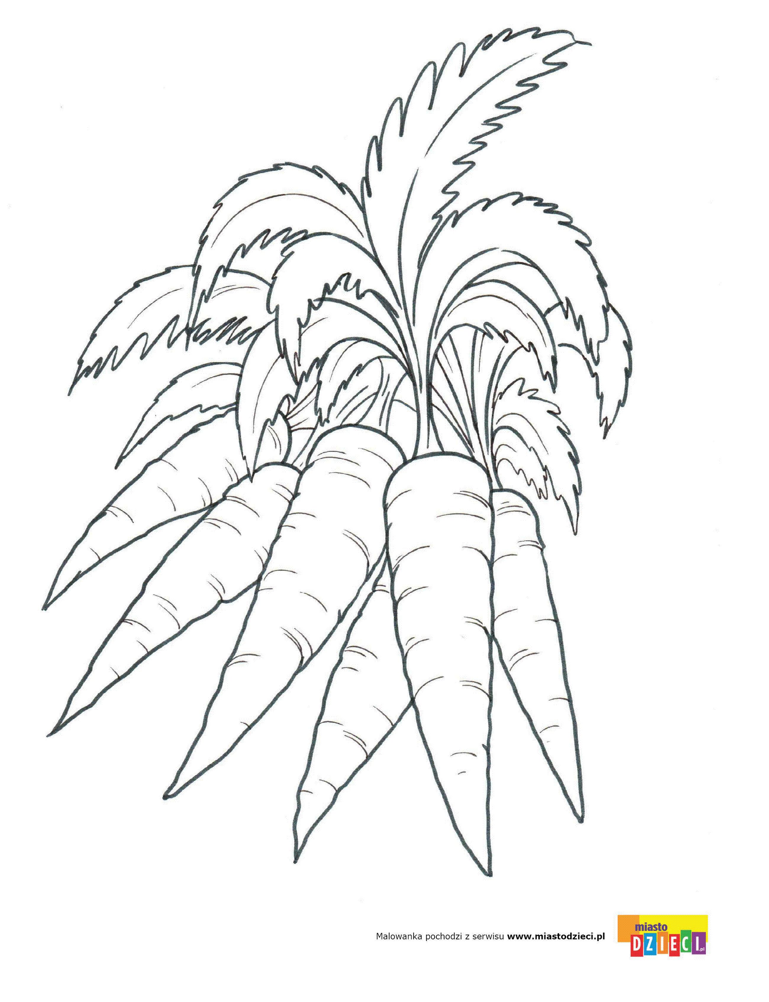 Marchew Kolorowanki Malowanki Dla Dzieci Do Drukowania Vegetable Drawing Cool Coloring Pages Art Drawings Simple