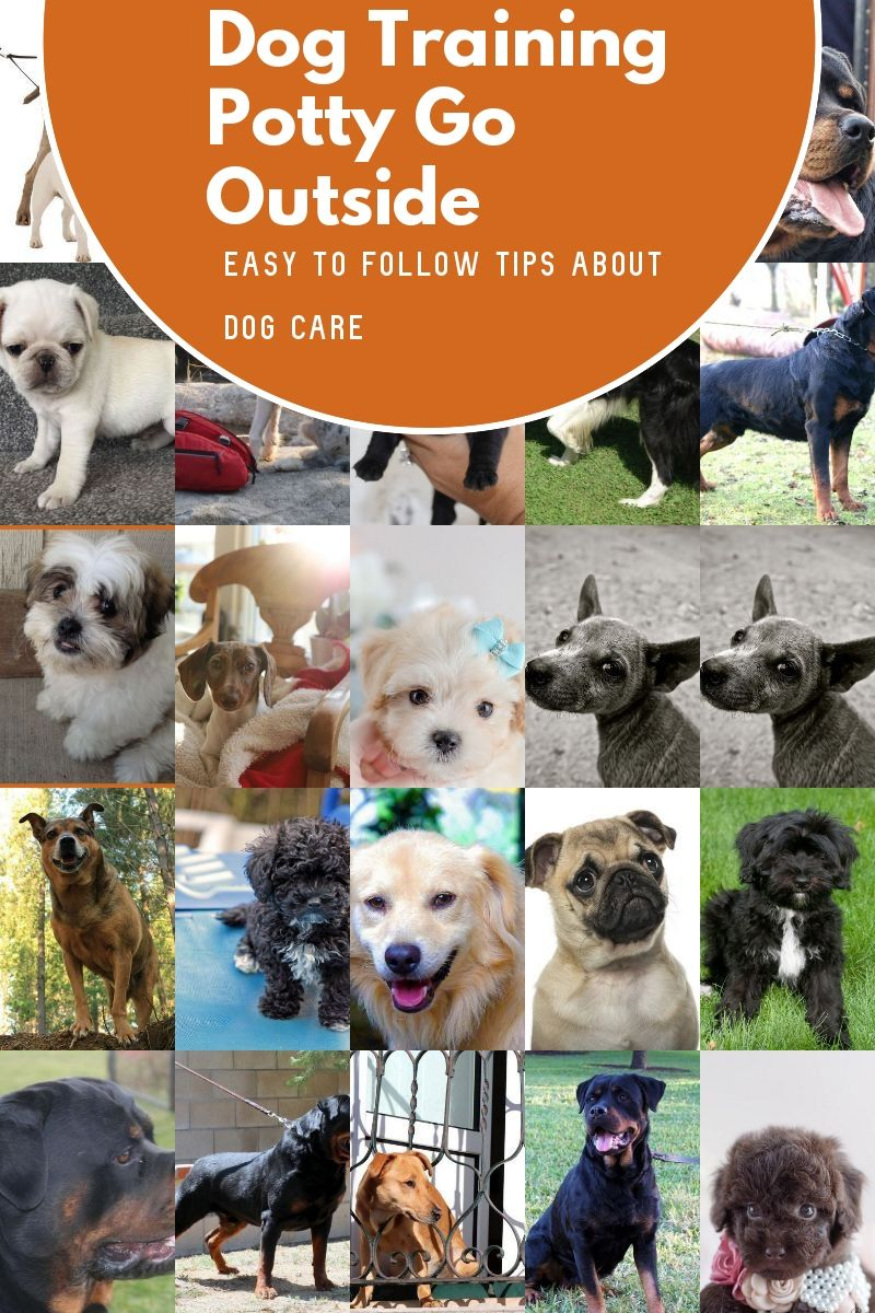 How To Get What You Want Through Your Pet You Can Get Additional Details At The Image Link In 2020 Basic Dog Training Dog Potty Training Dog Training