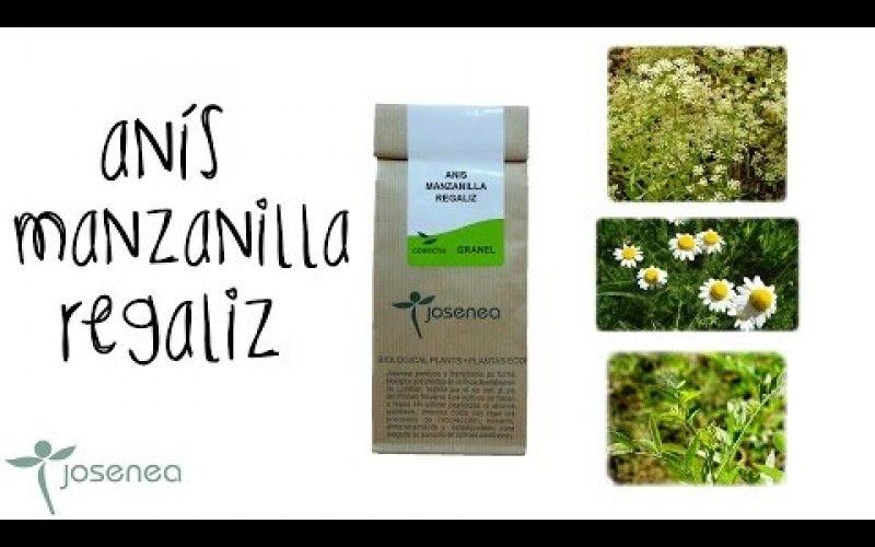 Remedios Naturales Con Plantas Ecológicas Remedios Naturales Remedios Regaliz