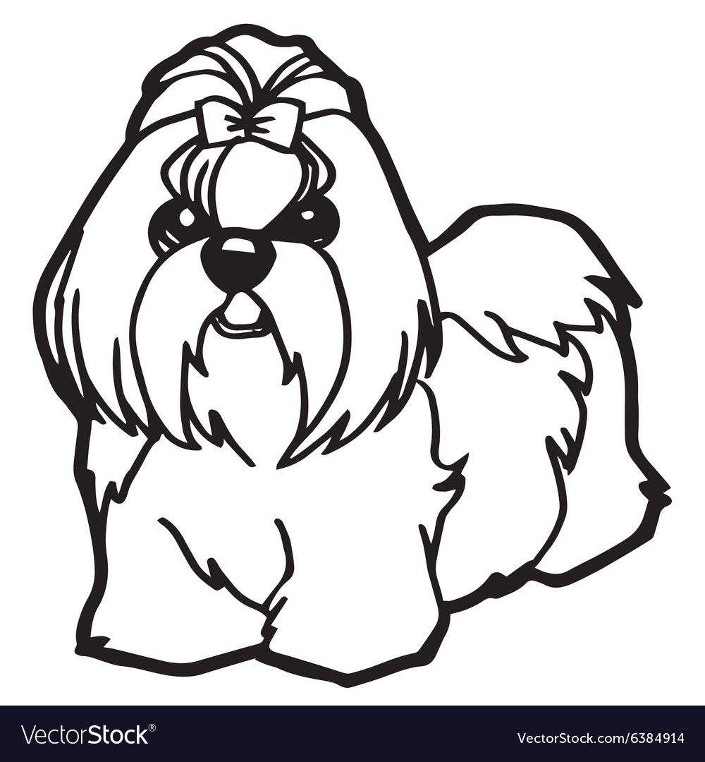 Shih Tzu Coloring Pages Havanese Dog Face Drawing Coloring Pages