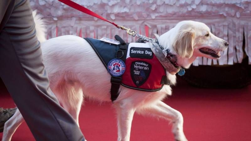 How To Register Your Dog As A Service Dog Service Dogs Dog Training Obedience
