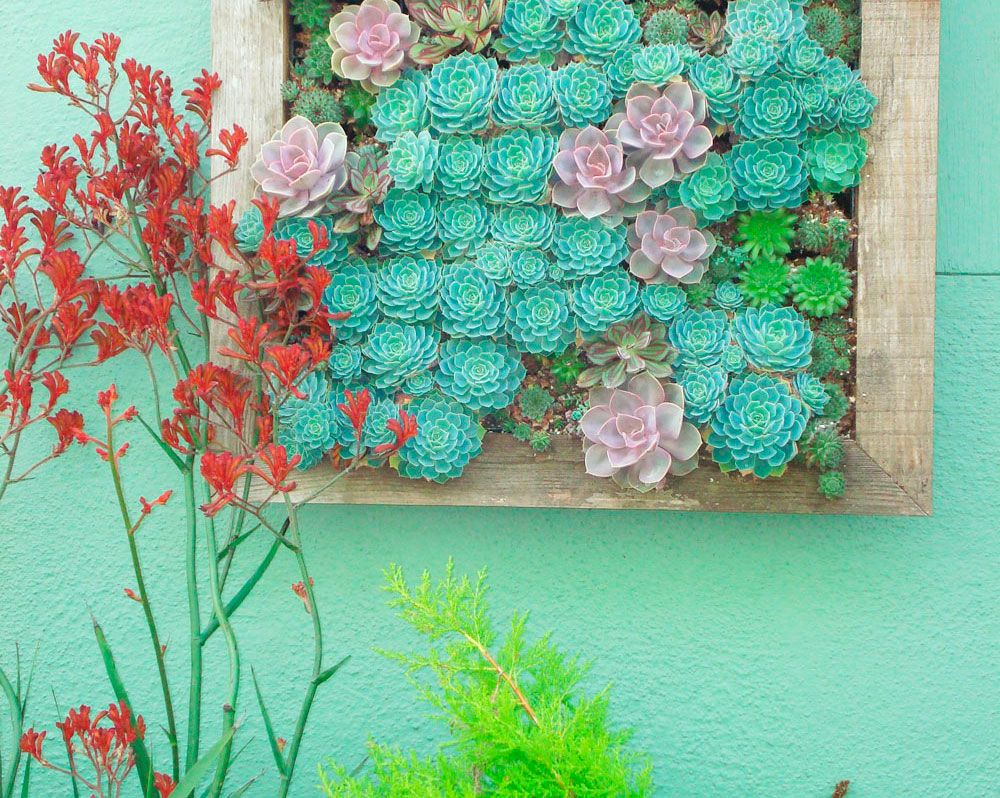A Living Wall Of Succulents Creates A Fun Conversation Piece At Your Next  Outdoor Party.