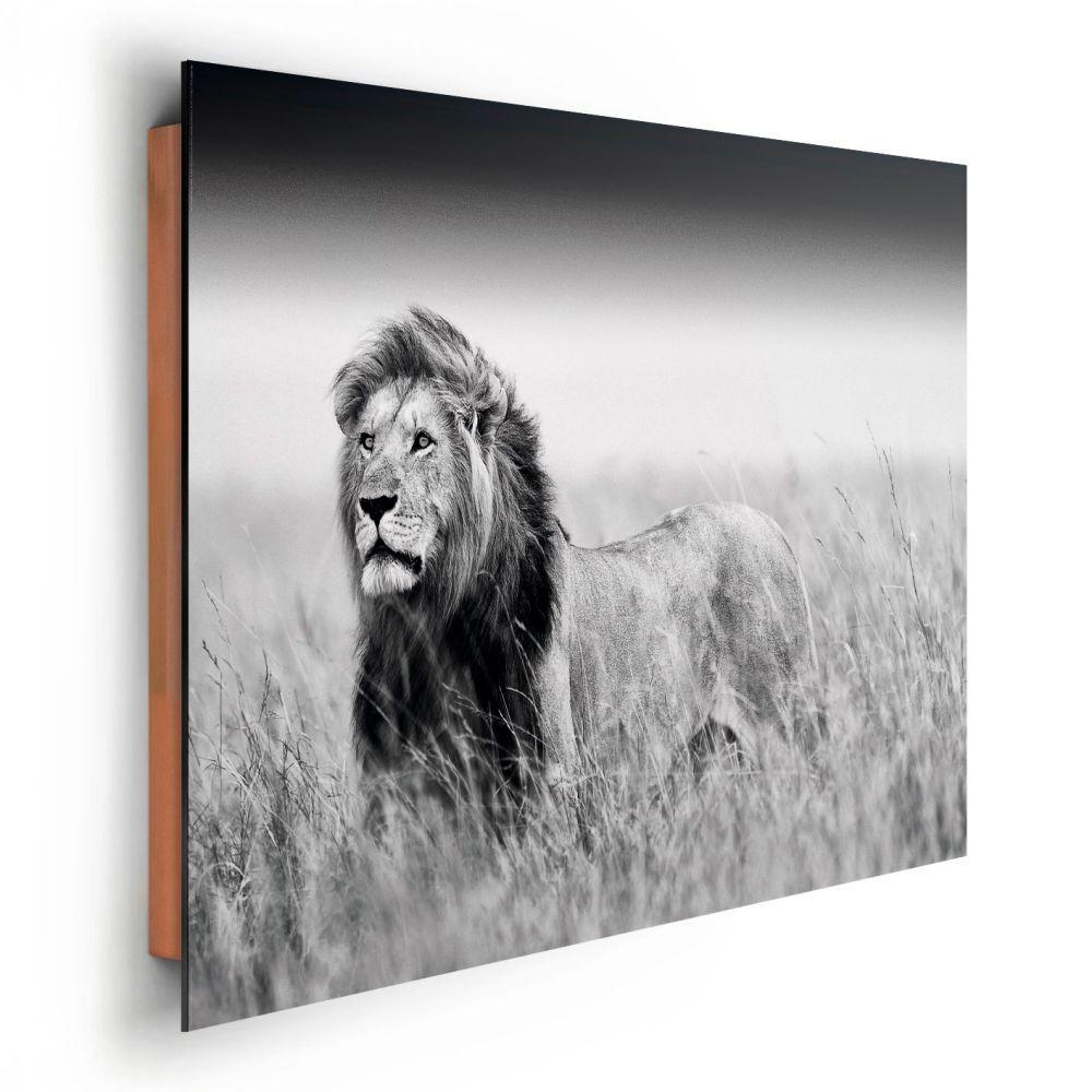 Poster: Kings of Nature - lion online te koop. Bestel je poster, je ...