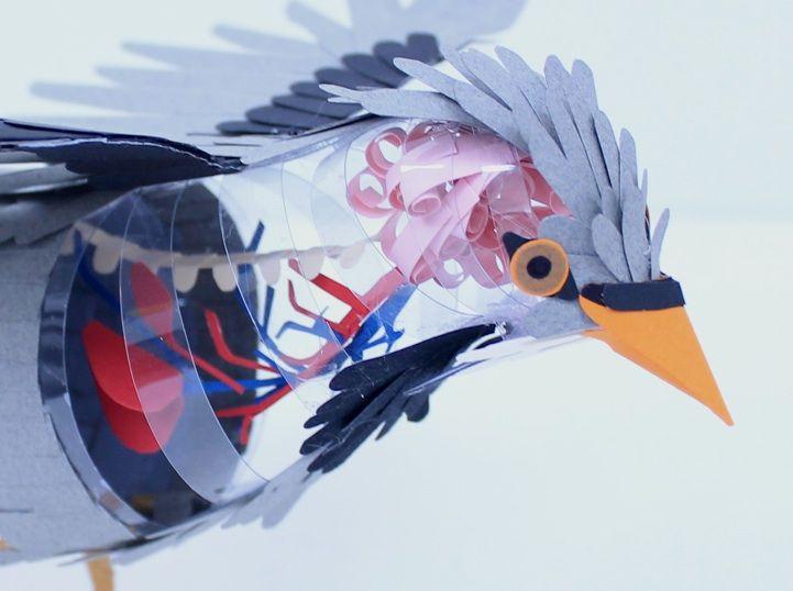 Amazing Paper Bird Sculptures Reveal Their Internal Anatomy | Paper ...