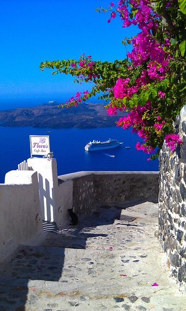 voukamvilia, a plant that grows in greek islands. Santorini
