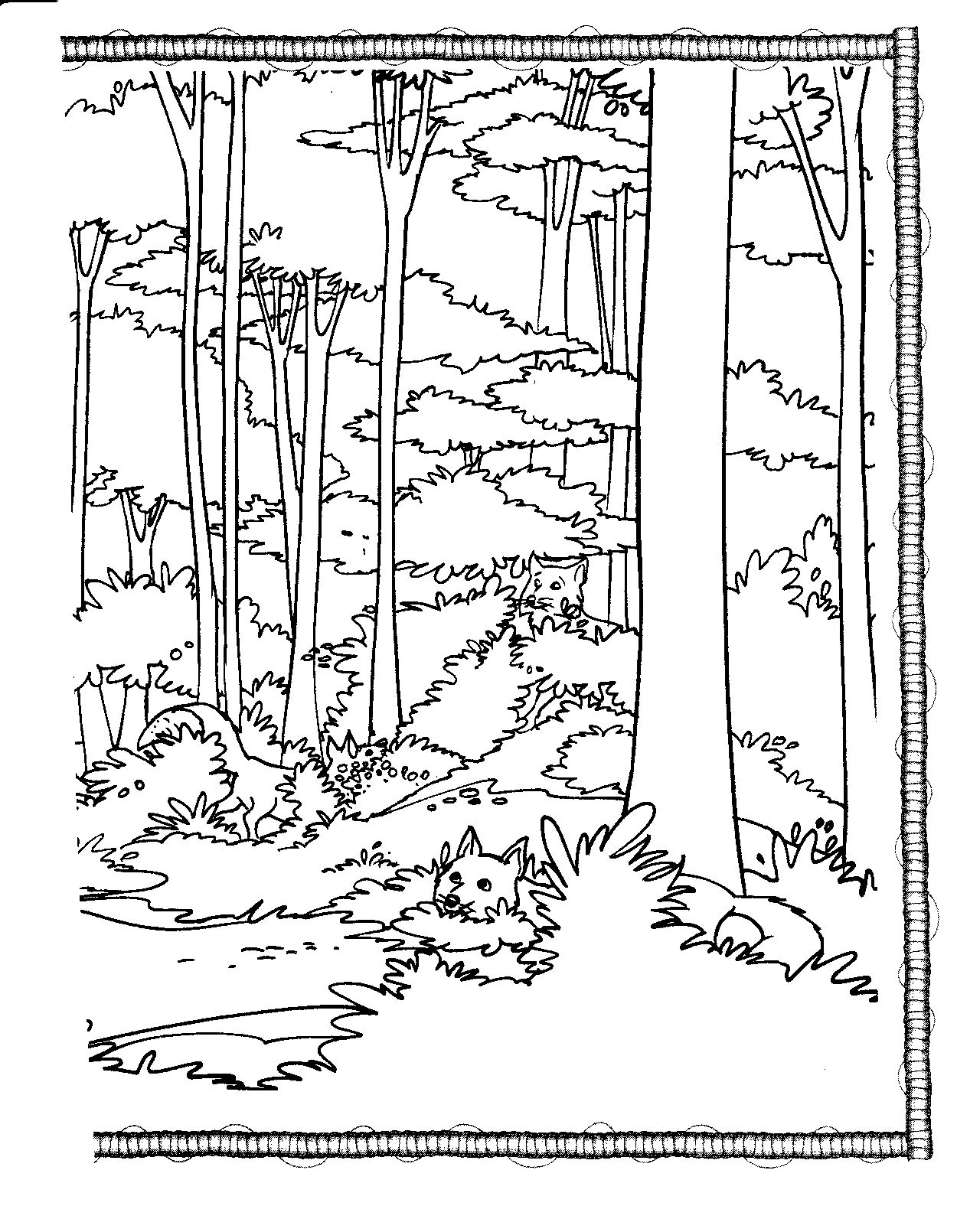coloring, book coloring, habitat, tall trees | VISUAL ARTS ...