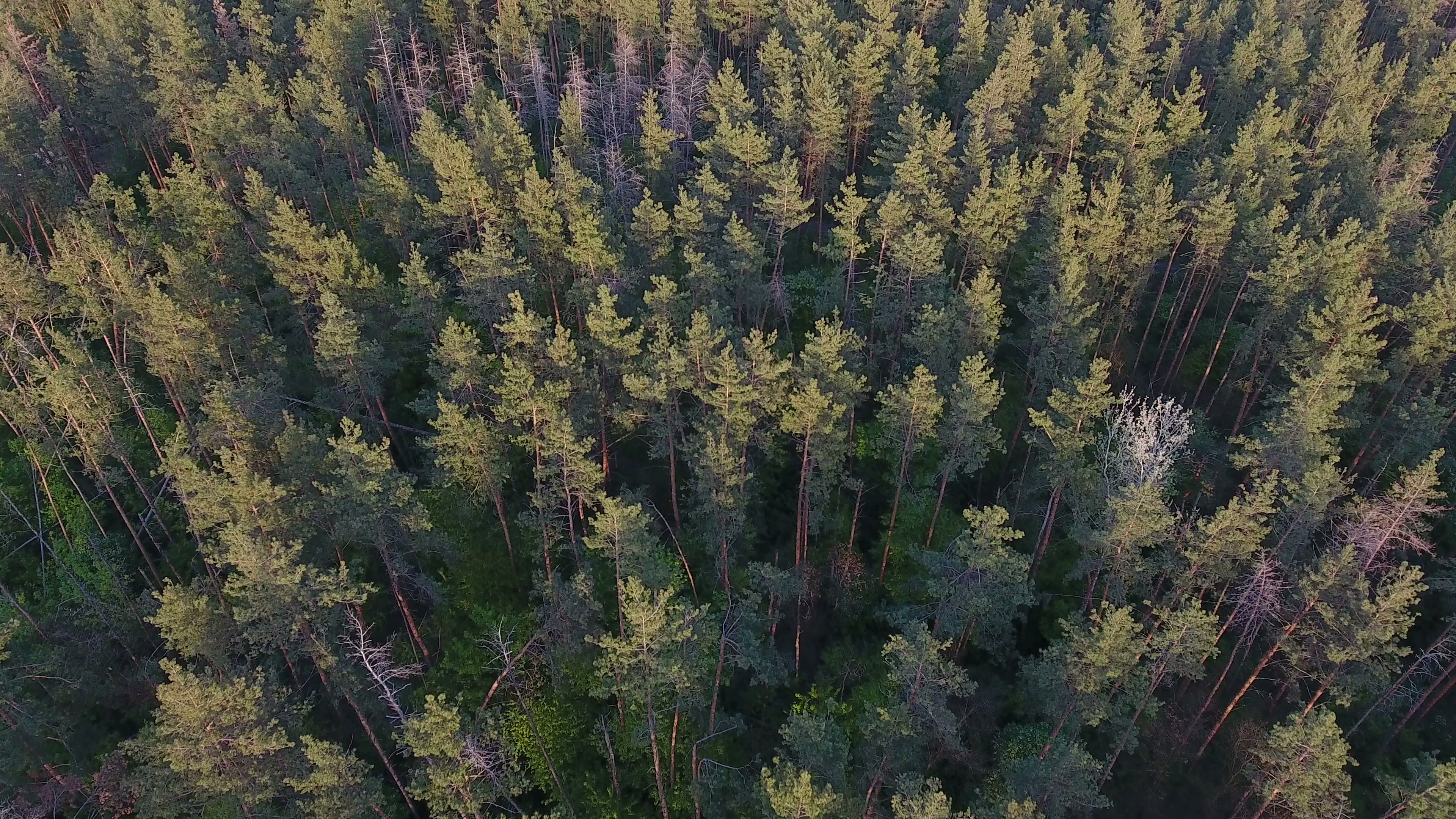 Birds Eye View Of A Forest