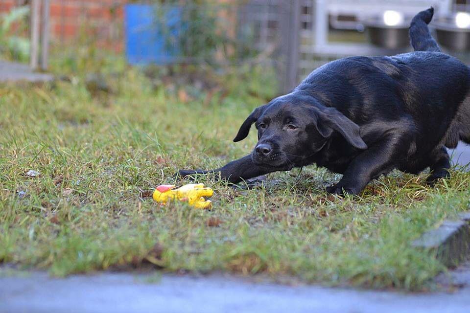 Oh My God A Yellow Dog Puppy Hunde Welpen Rassehunde