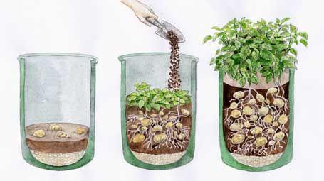 how to plant potatos in a pot kartoffeln richtig im k bel pflanzen garten terrasse pinterest. Black Bedroom Furniture Sets. Home Design Ideas