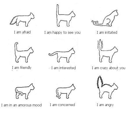 Tumblr Ljczxgh54b1qfxp7co1 500 Png Png Image 480x392 Pixels Cat Tail Cat Language Cat Body