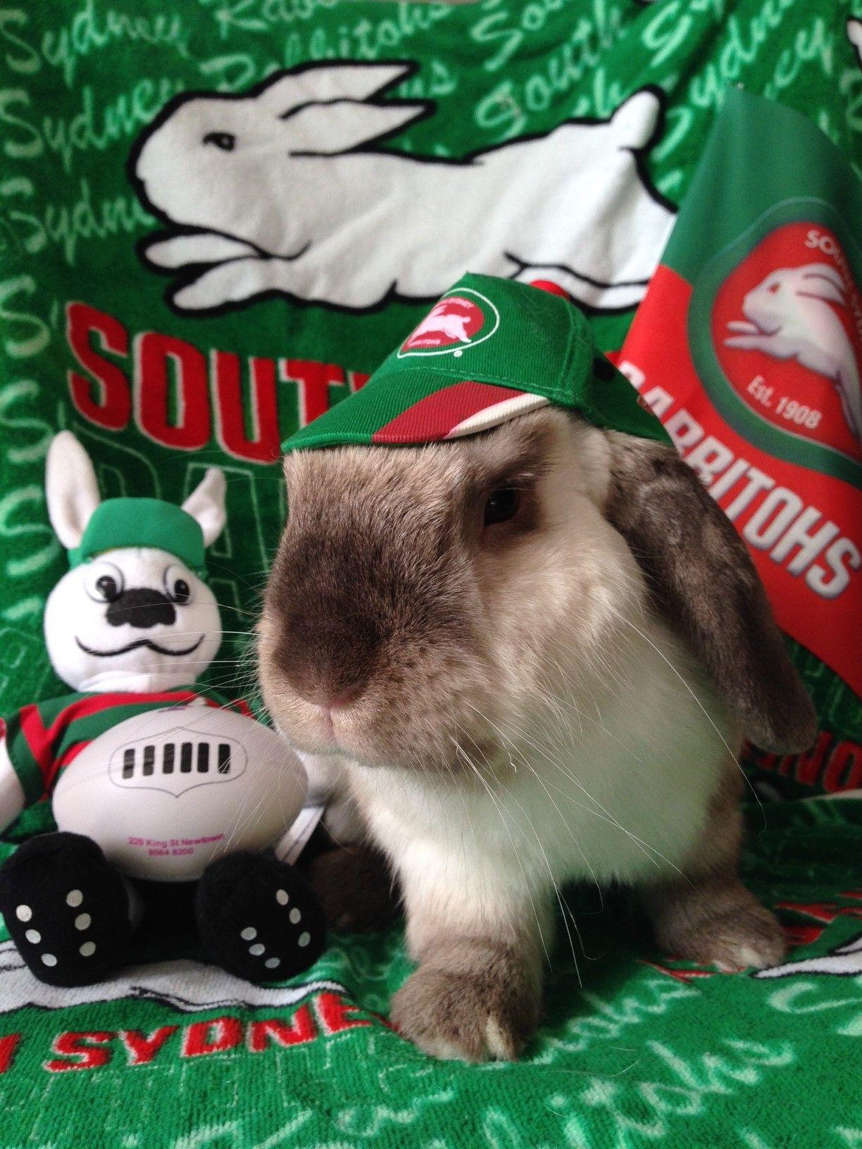 It S The Bunday Super Bowl Down Undah Rabbits In Australia Australian Rugby League Cute