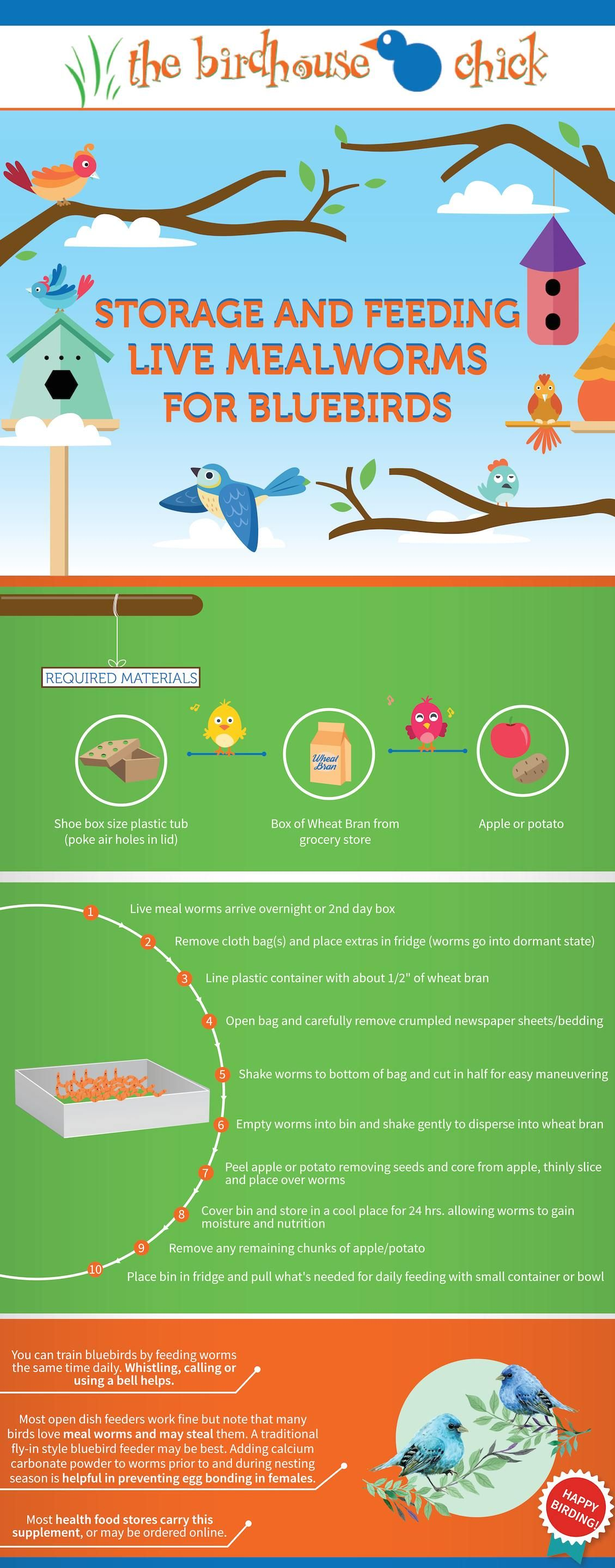 Dealing with live mealworms blue bird meal worms wild