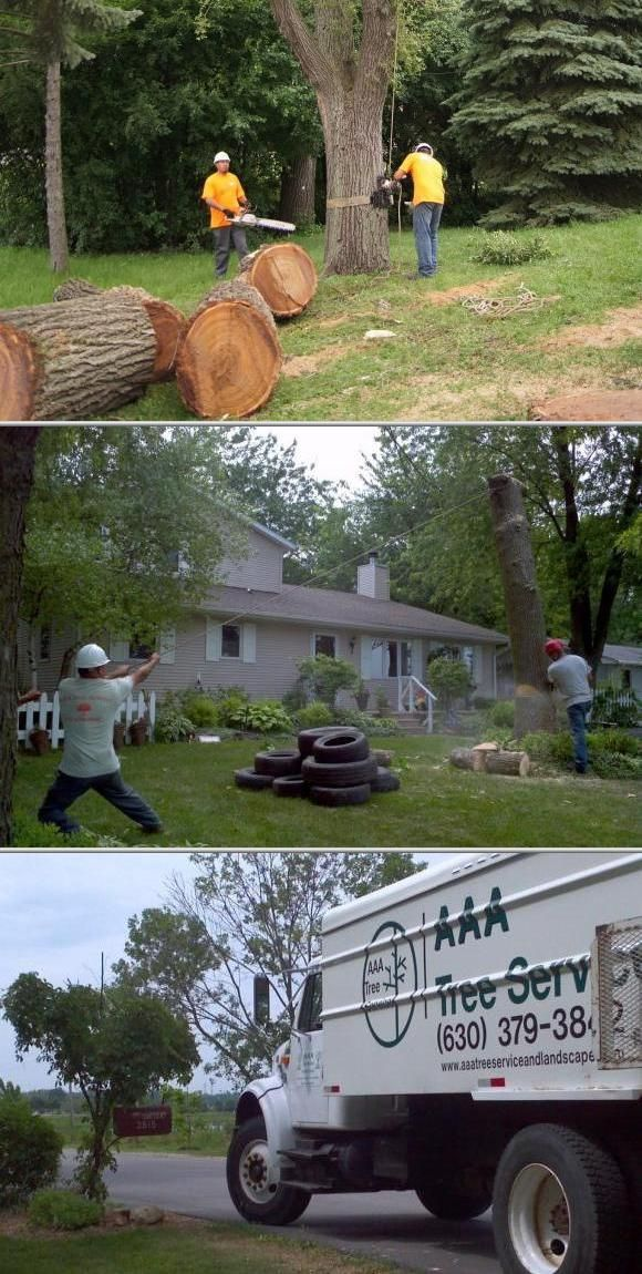 Check out this company if you are in need of quality stump grinding services. They also offer tree trimming and cabling, lot clearing, gutter cleaning, brush pickup, spring and fall cleanup, and more.