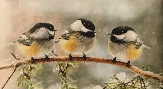 Beautiful Realistic Chickadee Tattoo By Australian Realism: Black Capped Chickadees, Part II (120 Pieces)