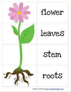 Parts of Plants And Their Functions | vegetables | Preschool garden ...