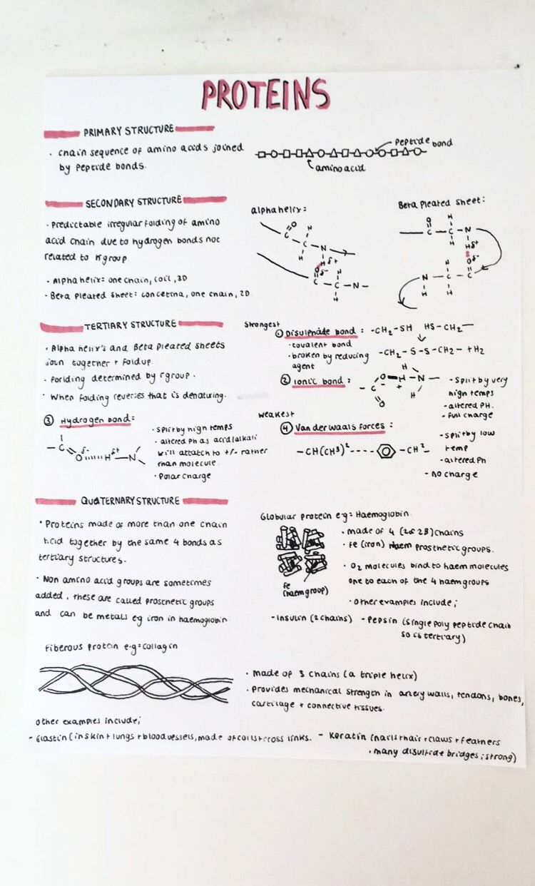 A level revision notes on proteins, amino acids and