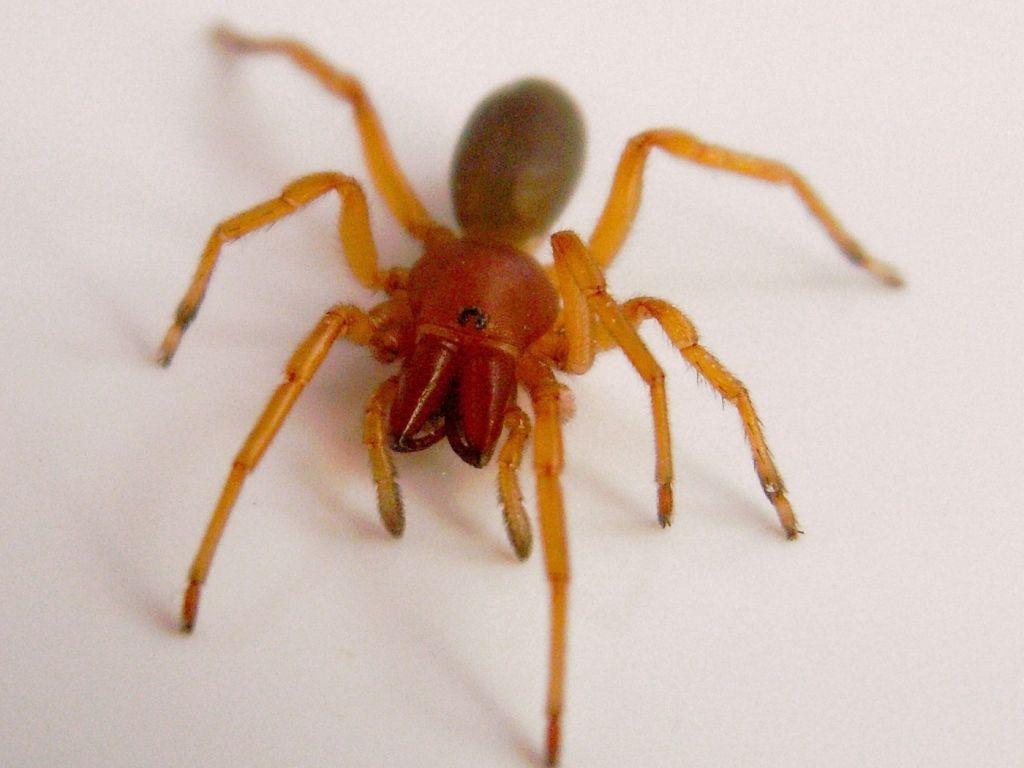 Red Spiders Black Widow Spider Spider Pictures Spider Baby