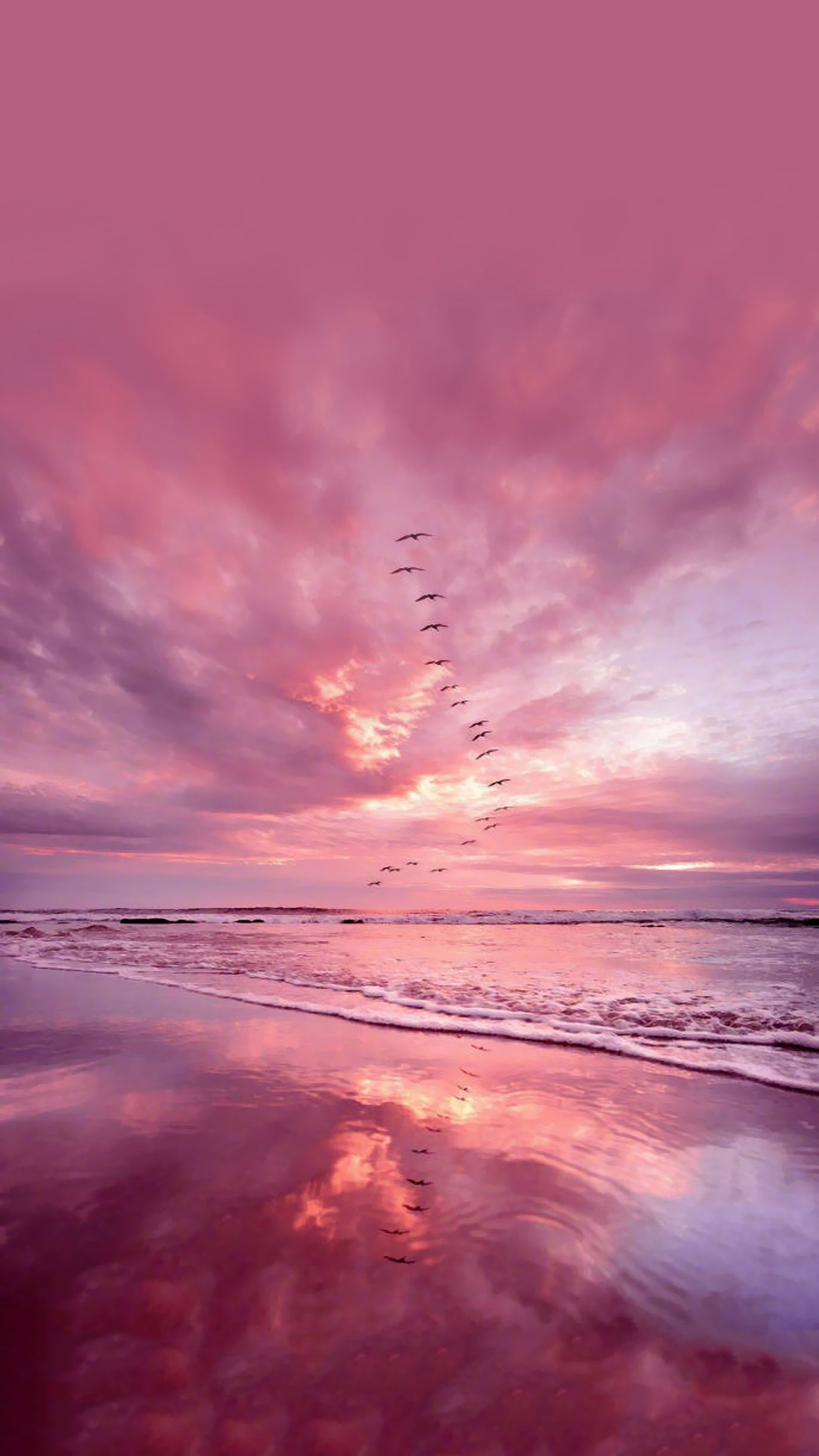 Pink sea & bird background wallpaper #cutewallpaperbackgrounds