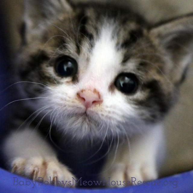 Bbmh Rescue Kittens Cutest Images Of Cute Cats Pretty Cats