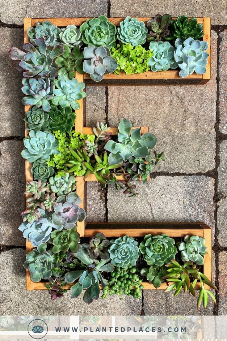 These Succulent Frame Kits Are Perfect For Those Who Love To Get Hands On And Diy A Unique Decoration They M Succulent Frame Succulents Succulent Wall Hanging