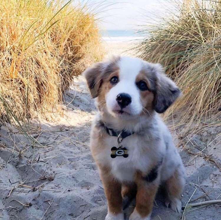 Puppy socialization checklist app