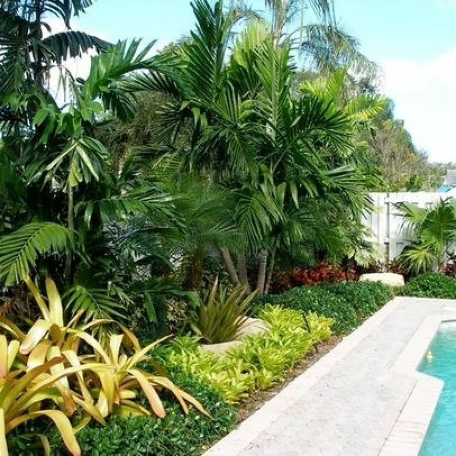 Tropical Home Garden Design Ideas: Recopilación De Jardines Tropicales Tan Bellos Que