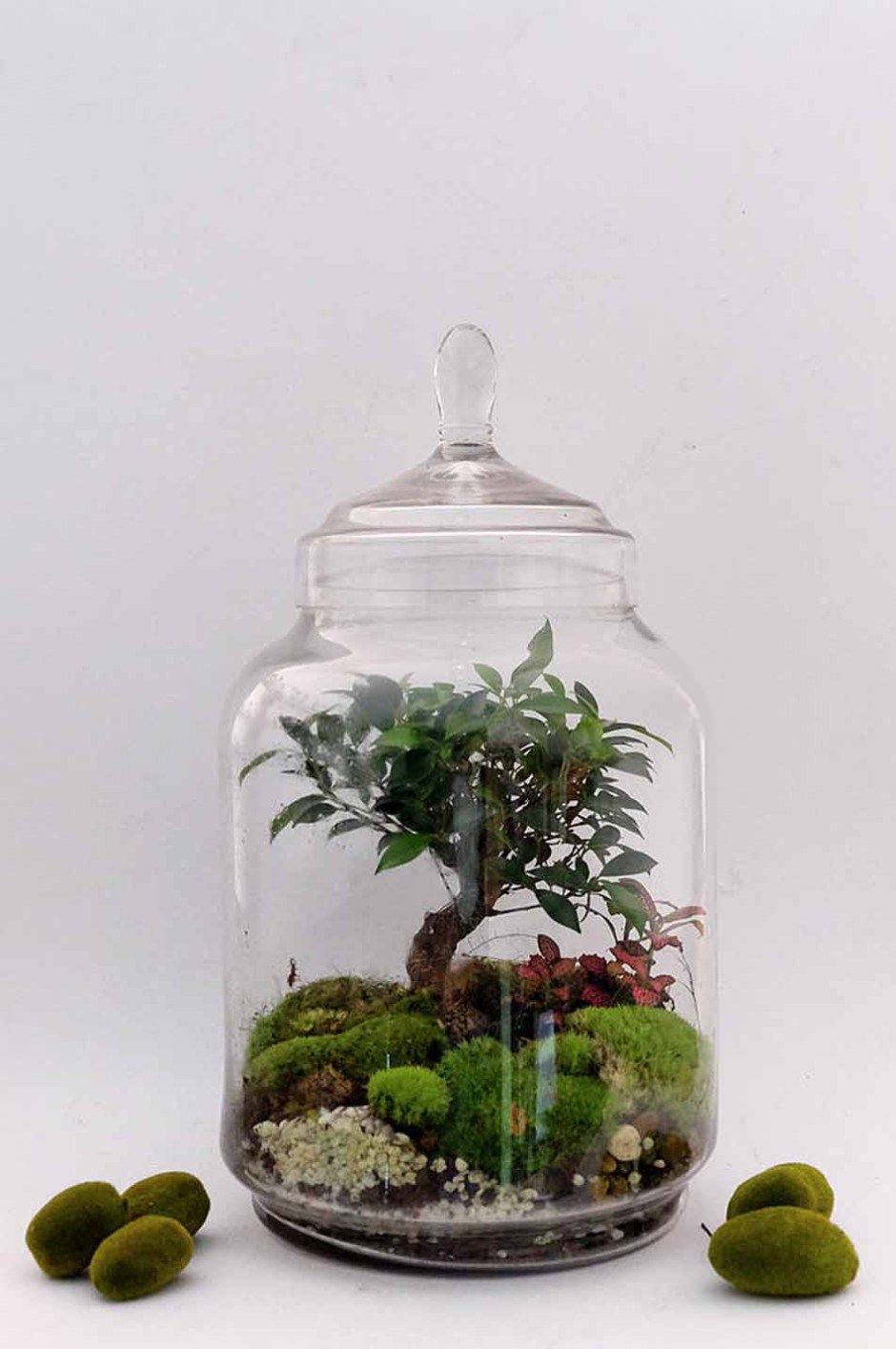 les jardins de verre de la green factory objects around garden terrarium terrarium et. Black Bedroom Furniture Sets. Home Design Ideas