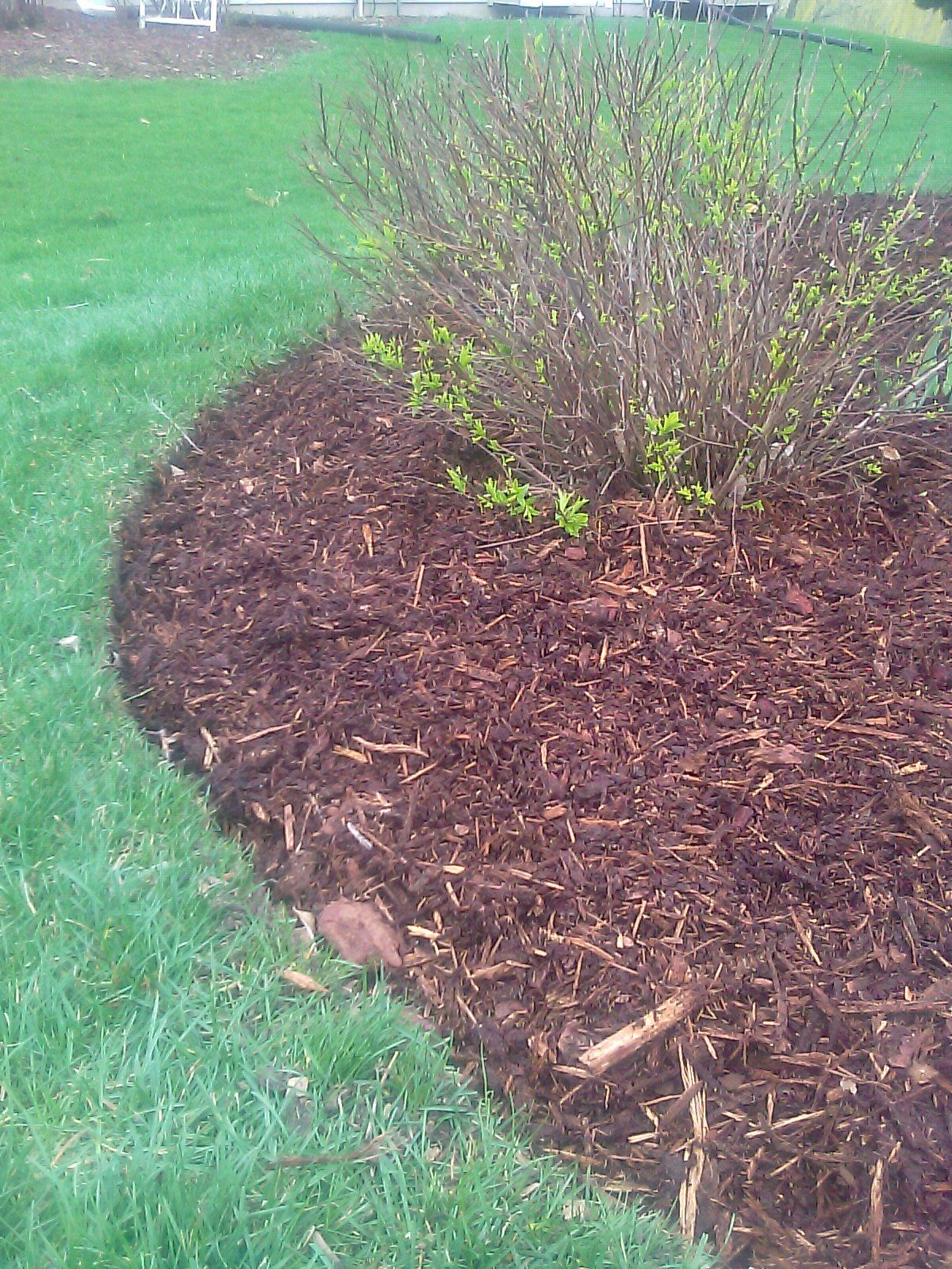 Edging a mulch bed around trees mulch landscape