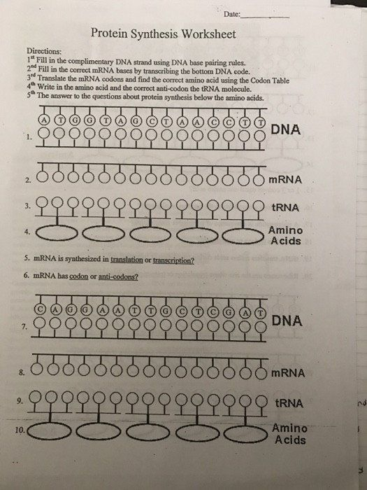Dna Base Pairing Worksheet Answers solved Date Protein ...