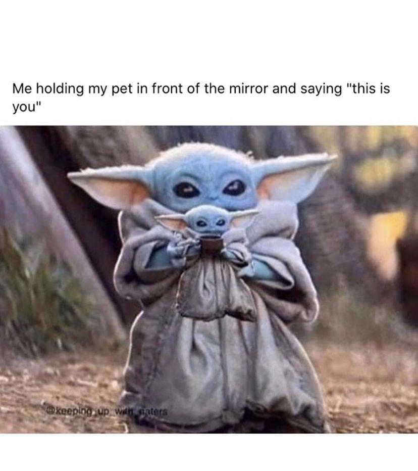 Pin By Zaria On 1 0 0 Memes Yoda Meme Funny Memes