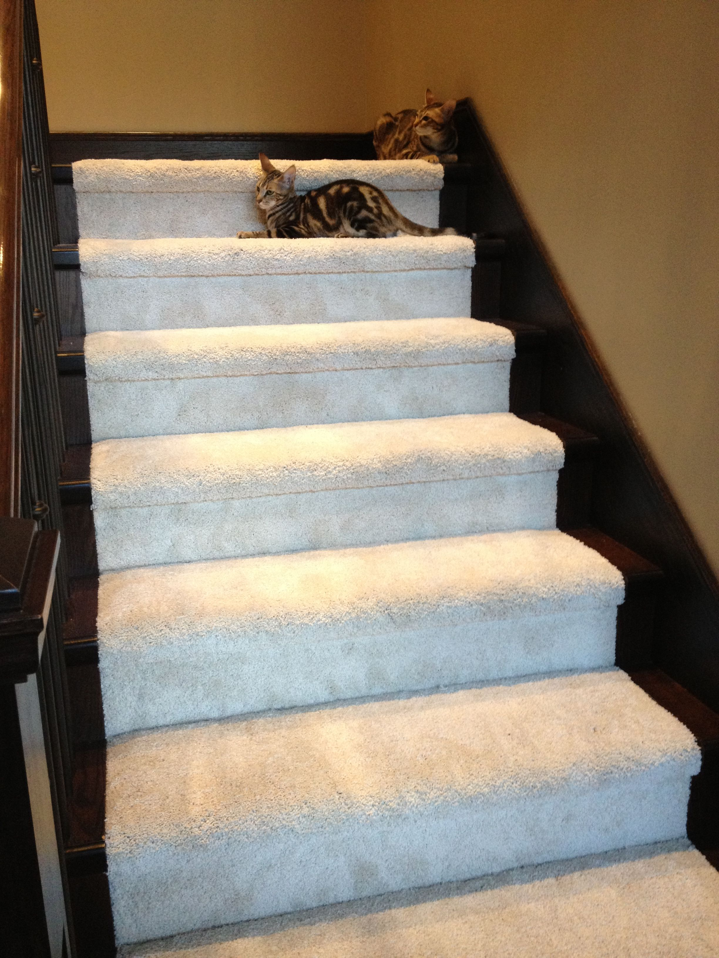 stairs done in mohawk smartstrand silk carpet