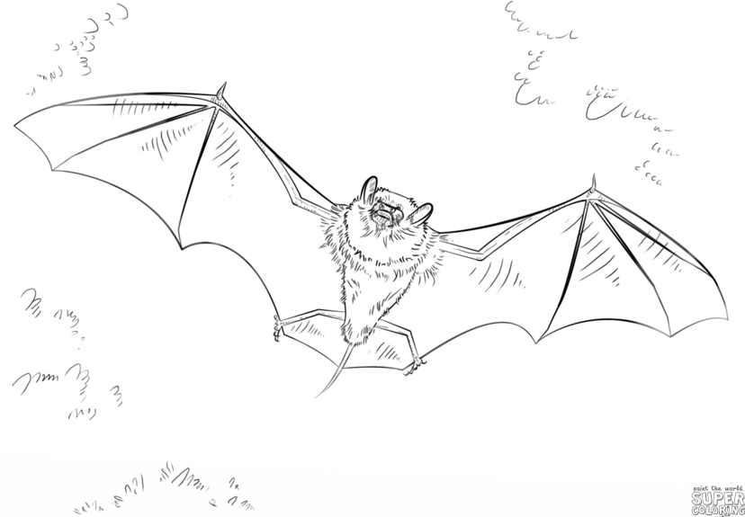 How To Draw A Bat Step By Drawing Tutorials