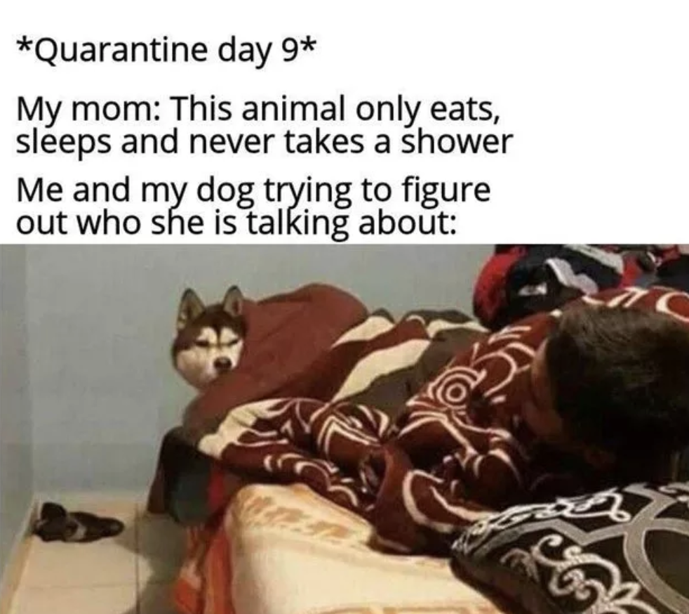The Funniest Memes To Cheer You Up During Quarantine | These times are weird and unsettling and definitely not easy, but here are some of the funniest memes from the past week while you're in Coronavirus quarantine that make it a little better, courtesy of r/dankmemes. Enjoy!