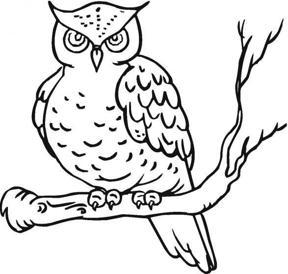 Coloring-Pages-Owl.gif #kidswoodcrafts