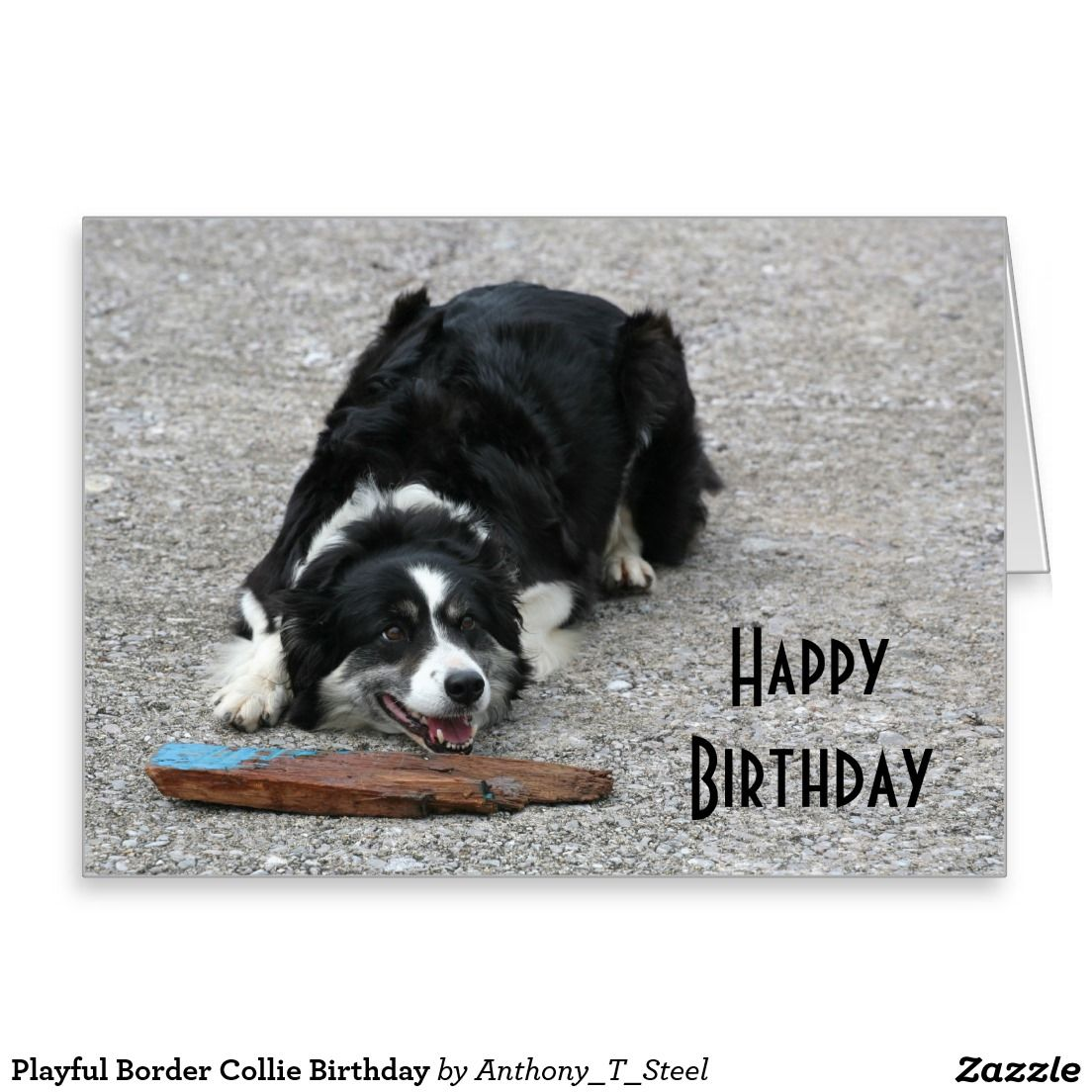 Playful border collie birthday greeting card for dog lovers playful border collie birthday greeting card for dog lovers kristyandbryce Choice Image