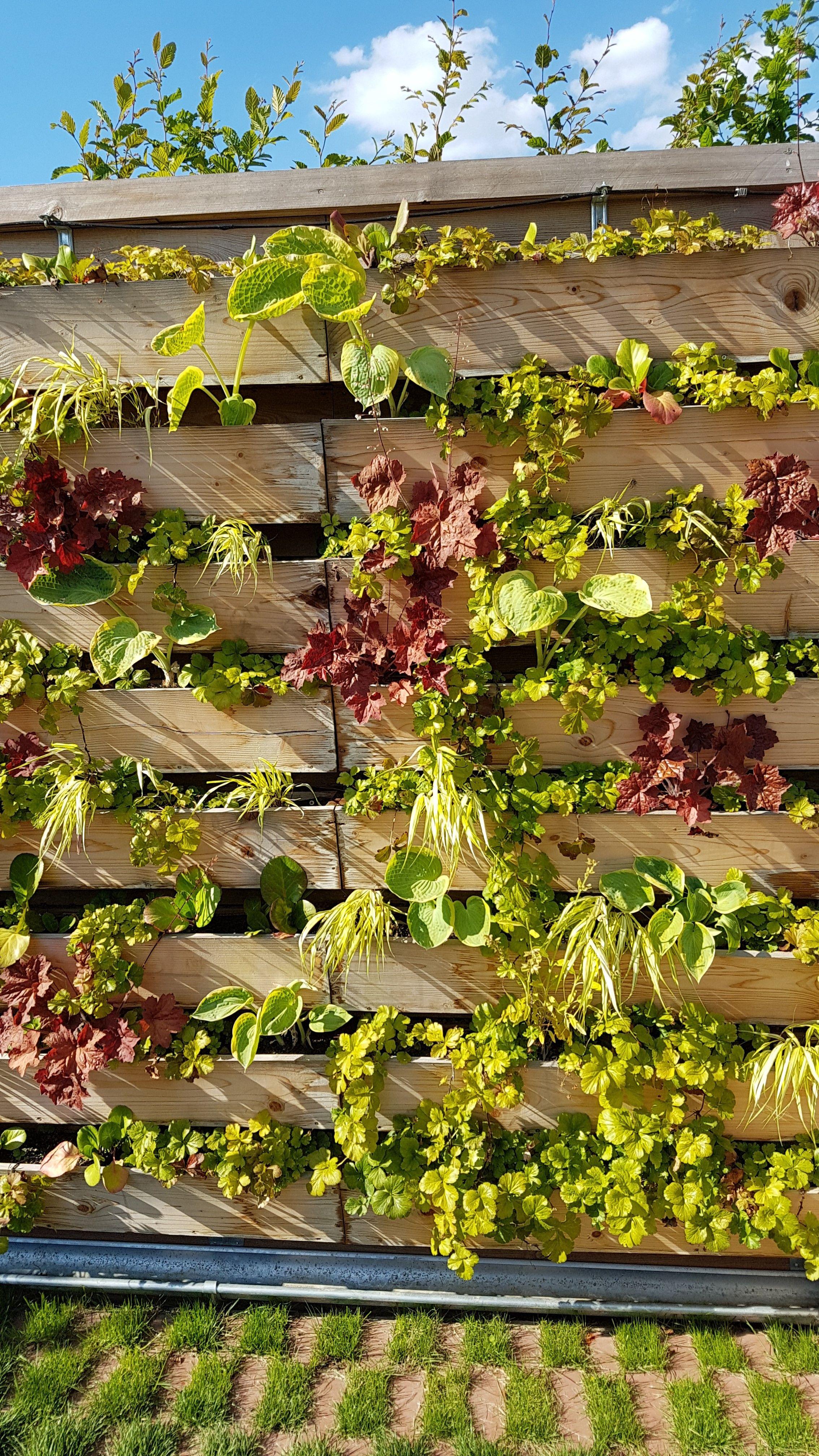 Gärtnern in Höhe Vertical Gardening eignet sich