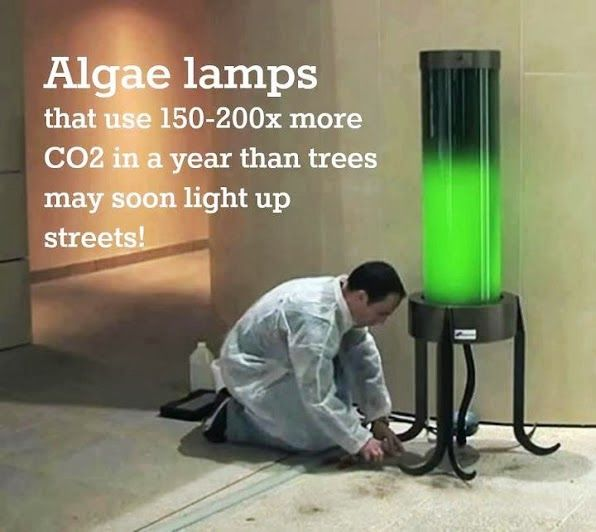 French biochemist and Shamengo pioneer Pierre Calleja has invented this impressive streetlight that is powered by algae which absorbs CO2 from the air. We have featured algae-powered lamps before but this one takes out 1 ton (!) of CO2 per year. This is as much CO2 as as a tree absorbs on average during its entire life.